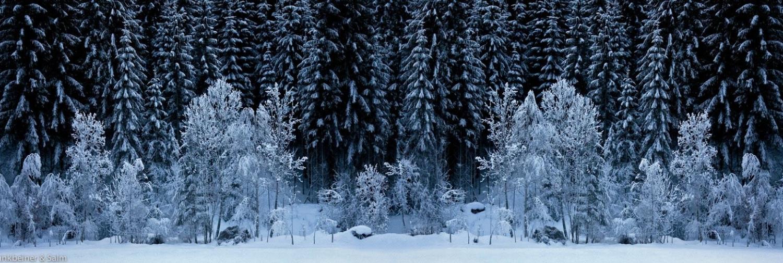 BLACK FOREST – WHITE WOOD, 2009